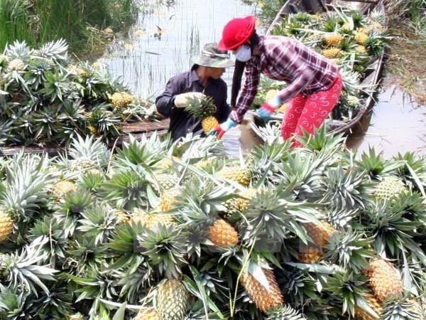 Empresa sudcoreana busca en localidad vietnamita oportunidades de inversion en agricultura hinh anh 1