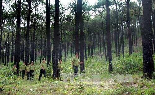 Cobertura forestal de Vietnam alcanza mas del 40 por ciento hinh anh 1