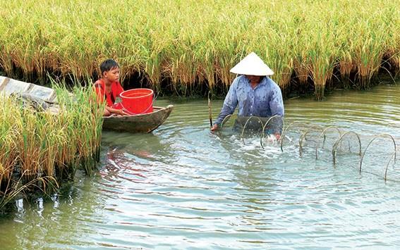 Intensifican conexion en cadenas de valor agricola en Vietnam hinh anh 1