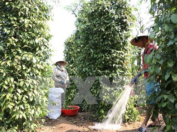 Vietnam y UE estudian oportunidades y retos en sector agricola hinh anh 1