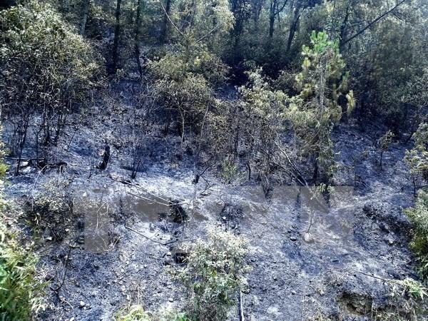 Extinguido incendio forestal en complejo paisajistico patrimonial Trang An hinh anh 1