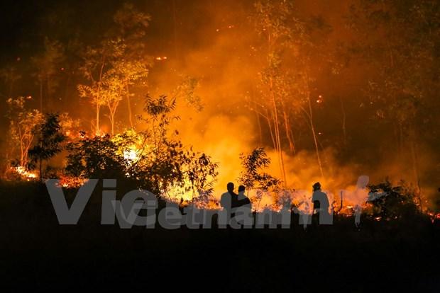 Provincia vietnamita refuerza labores contra incendios forestales hinh anh 1