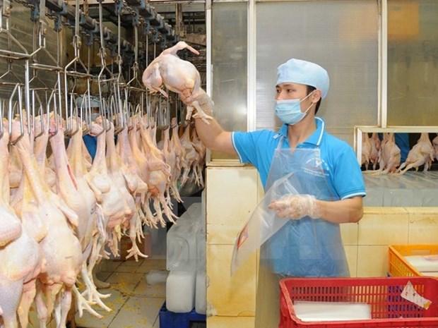 Vietnam exportara primer lote de productos procesados de aves de corral a Japon a fines de 2017 hinh anh 1