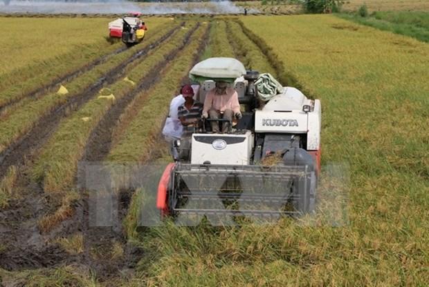 Vietnam y Japon intercambian experiencias en aplicacion de alta tecnologia en agricultura hinh anh 1