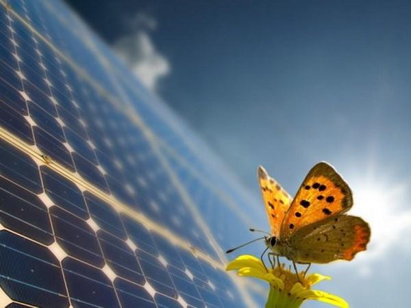 Desarrolla cooperacion en la esfera de energia eolica y solar en Ninh Thuan hinh anh 1