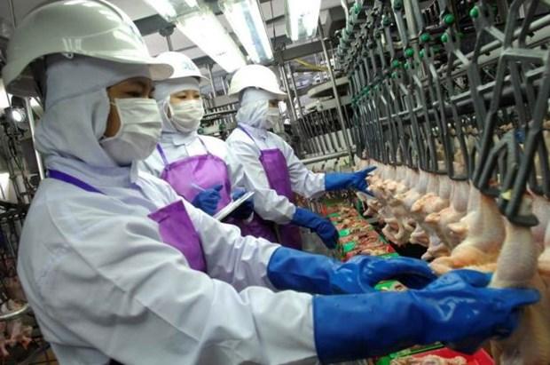 Tailandia aplicara nueva legislacion sobre trabajadores migrantes hinh anh 1