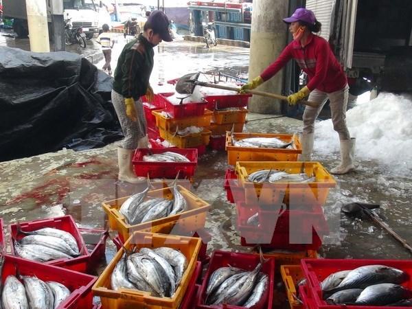 Thua Thien-Hue aumenta rendimiento de produccion de mariscos tras incidente ambiental hinh anh 1