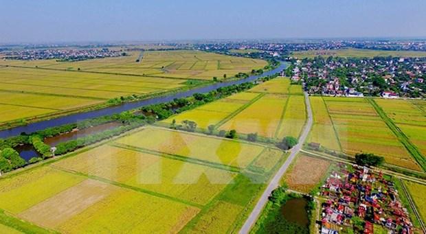 Vietnam logro gran incremento en exportaciones agricolas hinh anh 1
