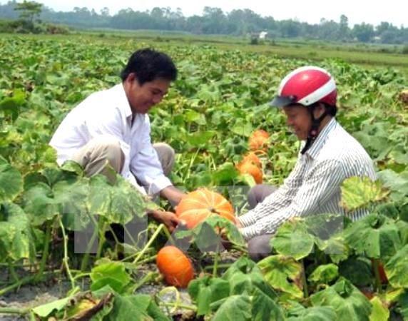 Hanoi moviliza fondos para construccion de nuevas zonas rurales hinh anh 1