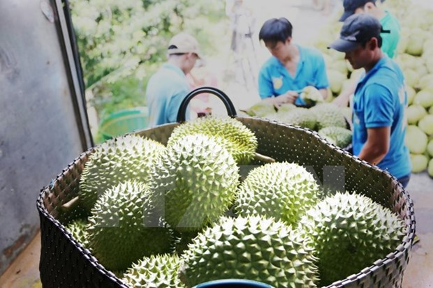 Frutas de Vietnam conquistan mercado internacional hinh anh 1