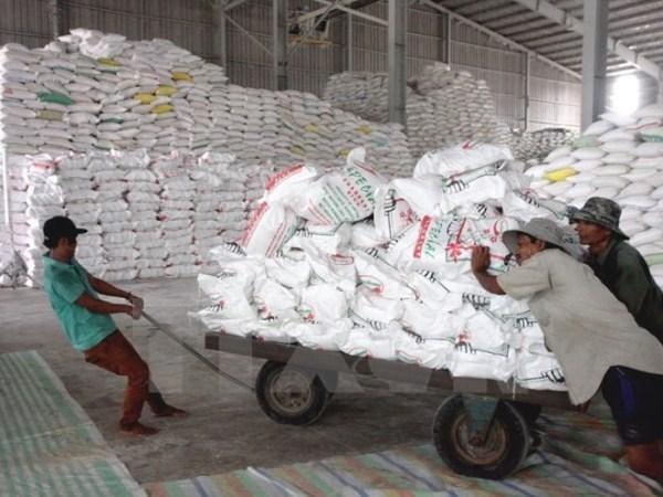 Vietnam exporta 2,56 millones de toneladas de arroz en seis meses hinh anh 1