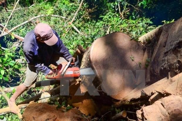 Exportaciones forestales de Vietnam alcanzaran 7,5 mil millones de dolares en 2017 hinh anh 1