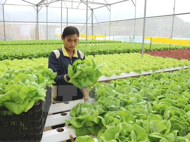 Vietnam con alta asistencia crediticia a agricultura de alta tecnologia hinh anh 1