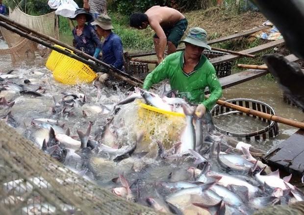EE.UU. examinara envios vietnamitas de pescado Tra a partir de agosto hinh anh 1