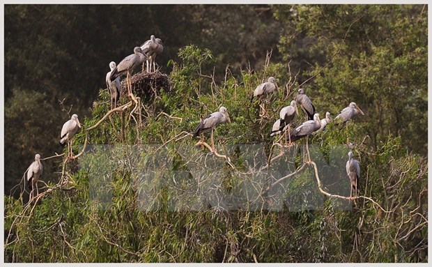 Miles de aves anidan en la isla de Hon Hai frente a la costa de Binh Thuan hinh anh 1