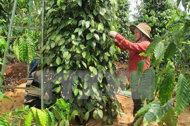 Altiplanicie Occidental de Vietnam busca alcanzar un desarrollo sostenible hinh anh 1