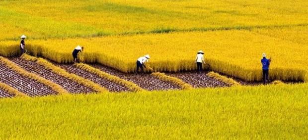 APEC 2017: Debaten en Vietnam desarrollo urbano- rural para fortalecer la seguridad alimentaria hinh anh 1