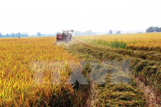 Hanoi reporta alto valor de produccion agricola hinh anh 1