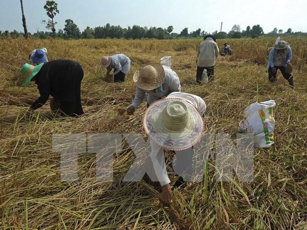 Sri Lanka y Bangladesh sellan gran contrato de compra de arroz de Tailandia hinh anh 1