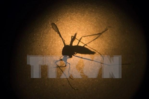 Malasia registra 122 muertos por dengue hinh anh 1