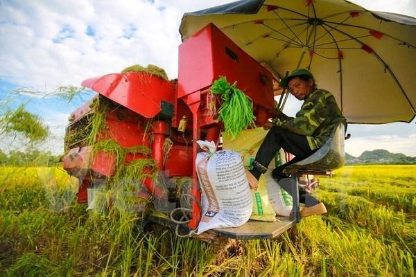 Empresas de Vietnam ganan licitacion para vender arroz a Filipinas hinh anh 1