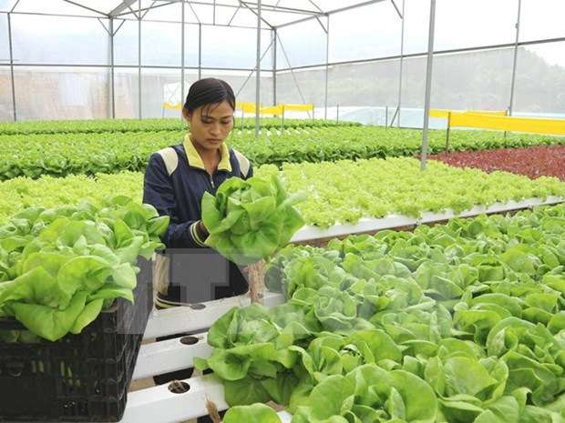 Desarrollan agricultura inteligente en Vietnam para afrontar cambio climatico hinh anh 1