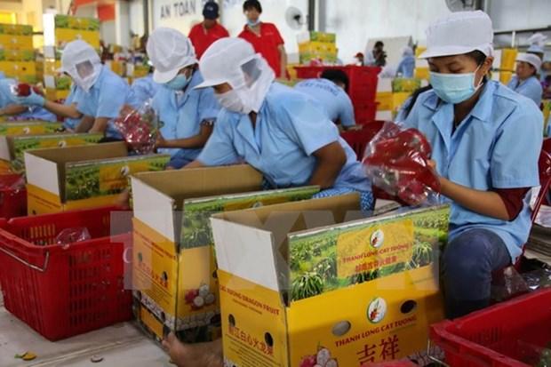 Vietnam preve exportar frutas y verduras por tres mil millones de dolares en 2017 hinh anh 1