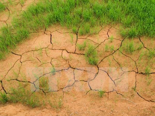 Vietnam implementara 24 proyectos en respuesta al cambio climatico en Delta del Mekong hinh anh 1