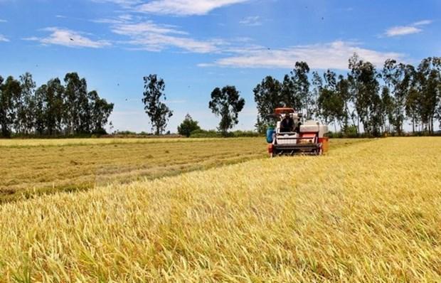 Vietnam y Mozambique poseen alto potencial en cooperacion agricola hinh anh 1