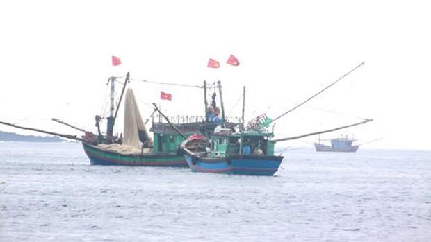 Japon respalda al sector pesquero de Vietnam hinh anh 1