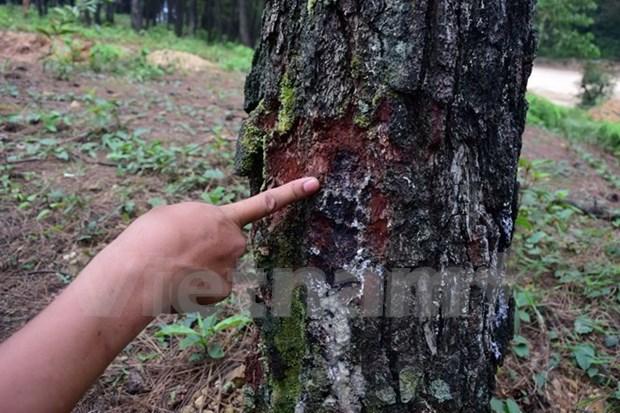Vietnam se esfuerza para proteger variedades de plantas raras hinh anh 1