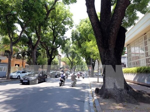 Hanoi prioriza la plantacion de arboles hinh anh 1