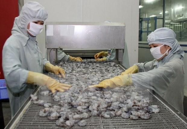 Exportaciones vietnamitas de camaron a China crecen 30 por ciento hinh anh 1