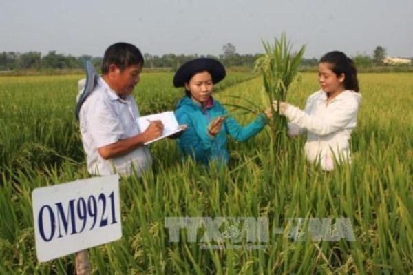 Agricultura de Vietnam con altas perspectivas para futuro desarrollo hinh anh 1