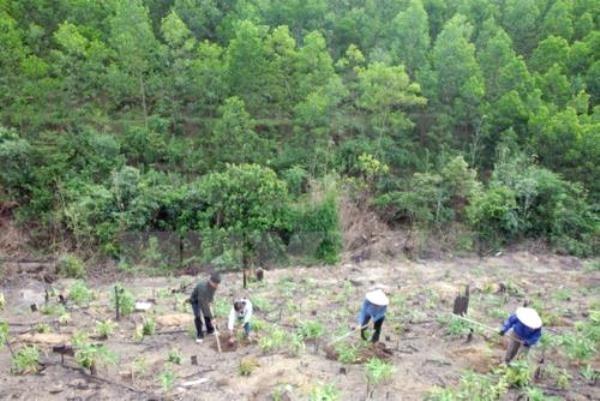 Provincias altiplanicas vietnamitas impulsan reforestacion hinh anh 1