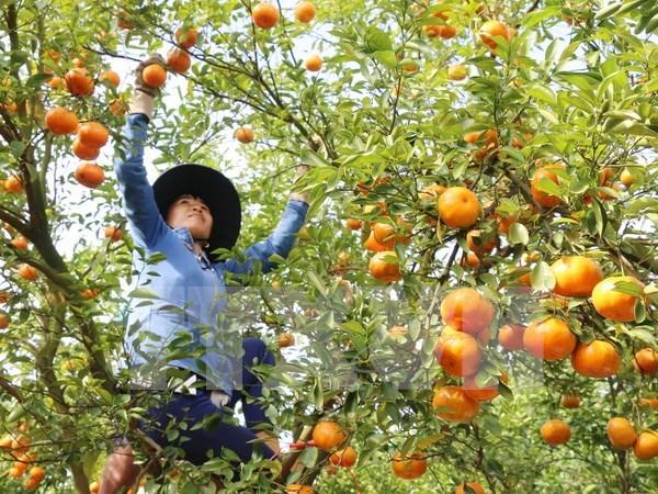 Japon por impulsar cooperacion con ciudad vietnamita en agricultura hinh anh 1