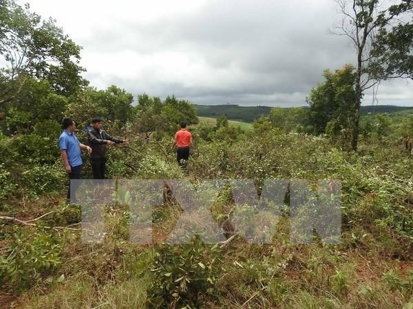 Politica de entrega de tierras y bosques de Vietnam muestra alta eficiencia hinh anh 1