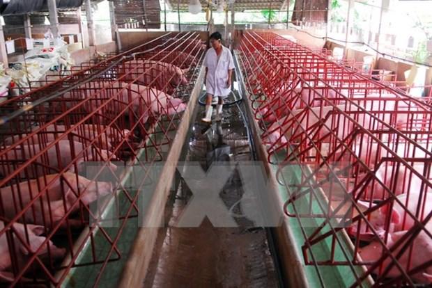 Vietnam lidera en ASEAN la produccion de piensos para ganaderia hinh anh 1