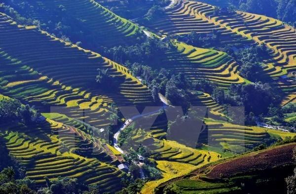 Festival cultural destacara belleza de terrazas de arroz de Vietnam hinh anh 1