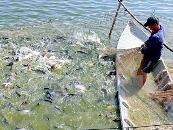 Vietnam lanza nuevo programa para monitorear pescados exportados a EE.UU. hinh anh 1