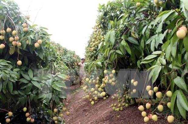 Provincia norvietnamita promueve inversiones en zonas agricolas de alta tecnologia hinh anh 1