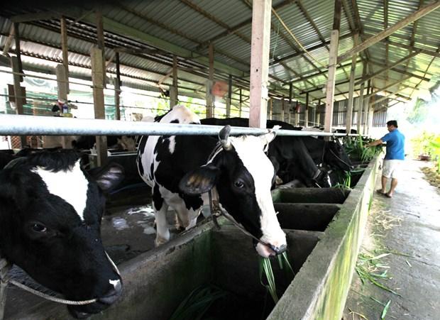 Ciudad Ho Chi Minh y Australia por impulsar cooperacion agricola hinh anh 1