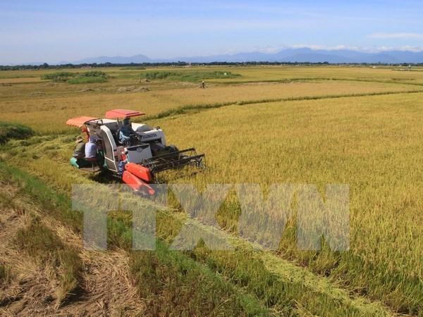 Exportaciones de arroz en Delta del rio Mekong se recuperan hinh anh 1