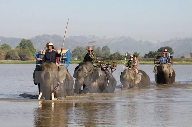Deterioro de habitat pone en jaque a elefantes en provincia vietnamita de Dak Lak hinh anh 1