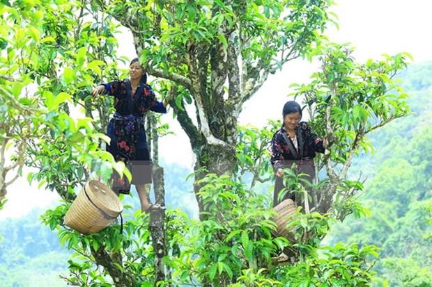 Vietnam elabora mecanismos mas favorables para desarrollo de agricultura organica hinh anh 1