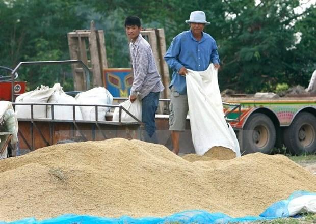 Gobierno tailandes busca estabilizar precios del arroz hinh anh 1