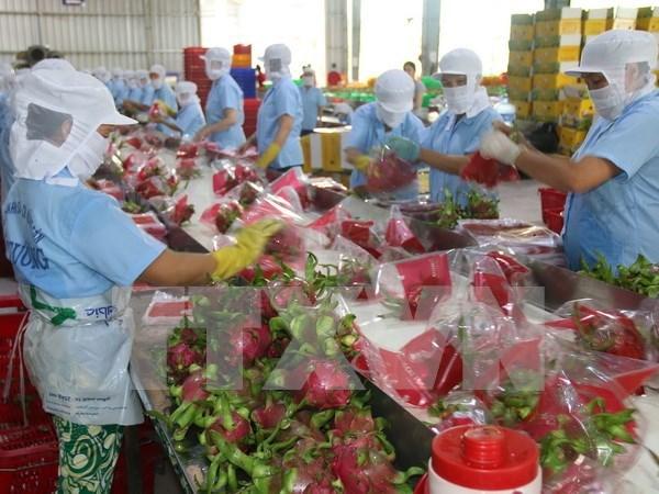 Vietnam y Laos impulsan cooperacion en agricultura hinh anh 1
