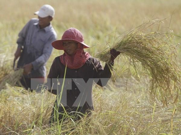 Ministros de Agricultura de subregion del Mekong se reunen en Camboya hinh anh 1