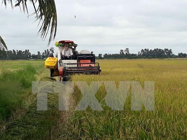 Sector agricola por alcanzar meta de crecimiento de 3,5 por ciento este ano hinh anh 1