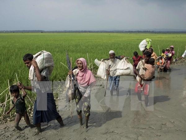 Exodo de rohingyas de Myanmar a Bangladesh se acerca a los 300 mil hinh anh 1